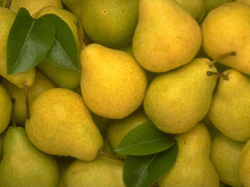 yellow-pears